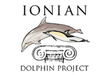 REPORT DOLPHIN AND WHALE SIGHTINGS